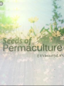 Seeds of Permaculture