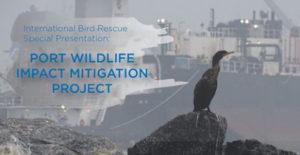 Port-Wildlife-Impact-6-24-19