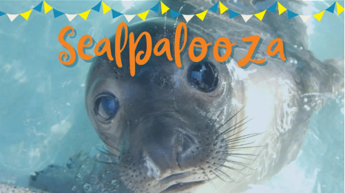 sealpalozza