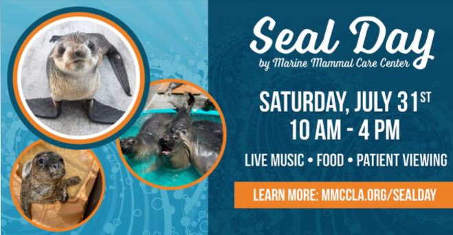 Seal Day at Marine Mammal Care Center
